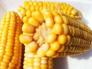 corn-87332_1280