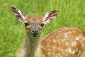 deer-837439_640